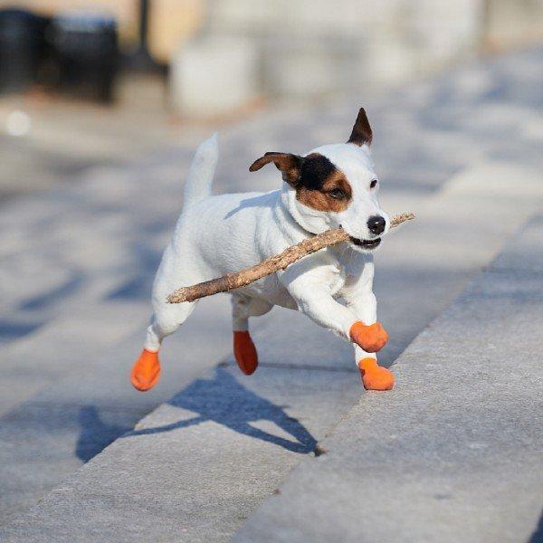 Rubber Dog Boots - Hundegummistiefel