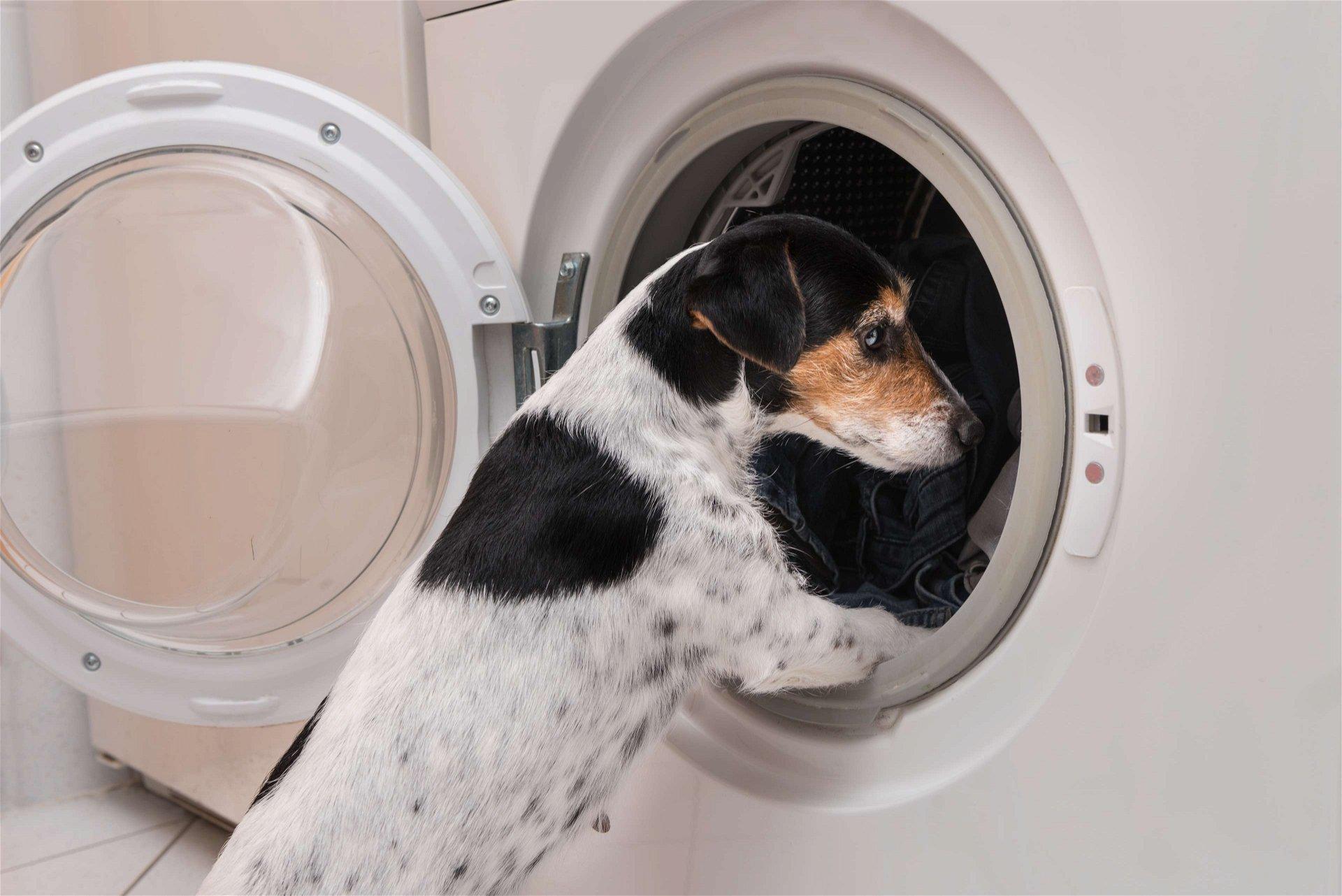 Hund-Waschmaschine_1920x1920-2x2L1O1CZtpXrkH