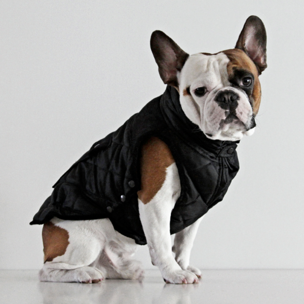 Monaco Coat - French Bulldog - Black