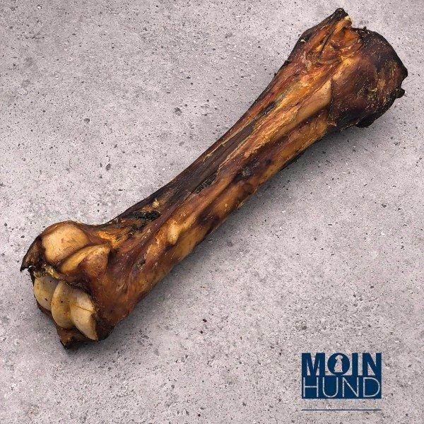 Pferde Knochen