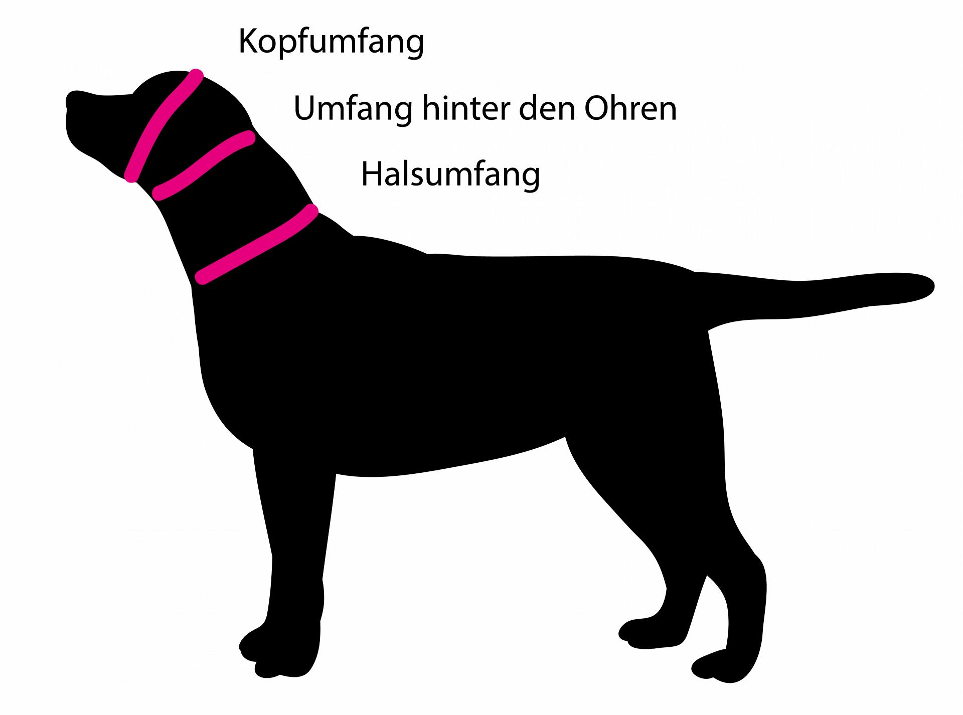 Hund-Messanleitung