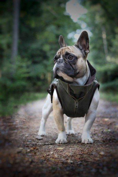 Windsor Jacket - Navy - French Bulldog
