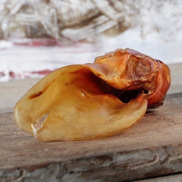 Barfgold - Rinderohren ohne Fell mit Muschel