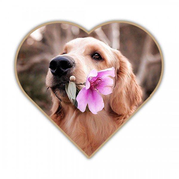 Moin Hund - Geschenkgutschein